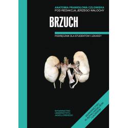Anatomia prawidłowa SKAWINA - Brzuch